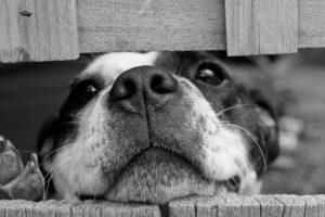 dog-cute-pet